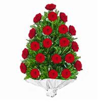 Jerba trandafiri rosii