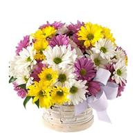 Cosulet cu crizanteme